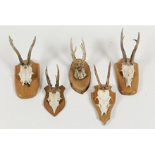 Vintage German Roe Deer Antlers, Set of 5