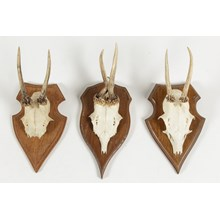 Vintage German Roe Deer Antlers, Set of 3