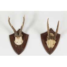 Vintage German Roe Deer Antlers, Pair